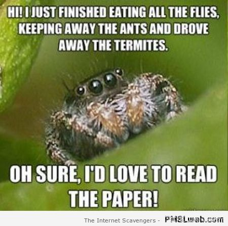 Friendly spider newspaper meme at PMSLweb.com
