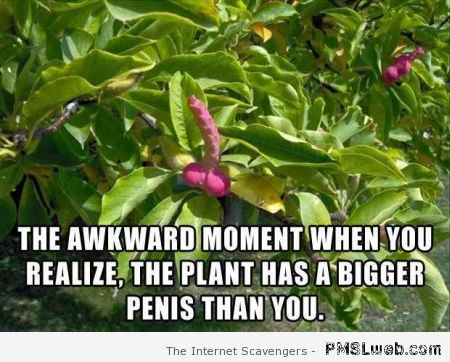 Plant has a bigger penis than yours – NSFW funnies at PMSLweb.com