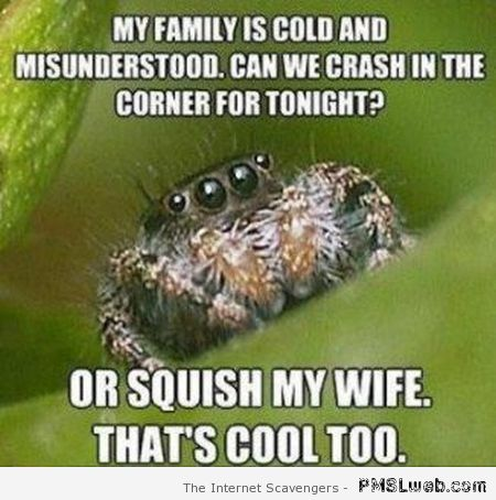 Friendly spider squish my wife meme at PMSLweb.com