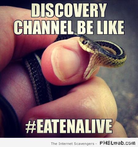 Discovery channel be like meme at PMSLweb.com