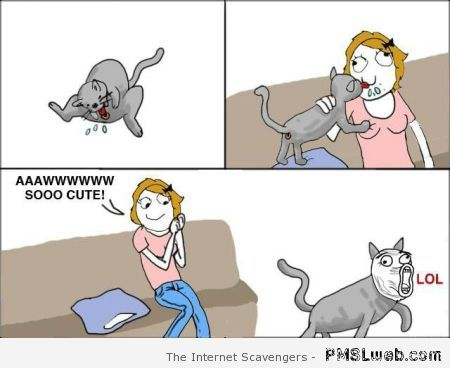 Kitty is cute rage comic at PMSLweb.com