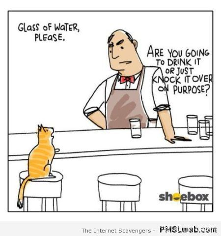 Funny cat at the bar cartoon at PMSLweb.com