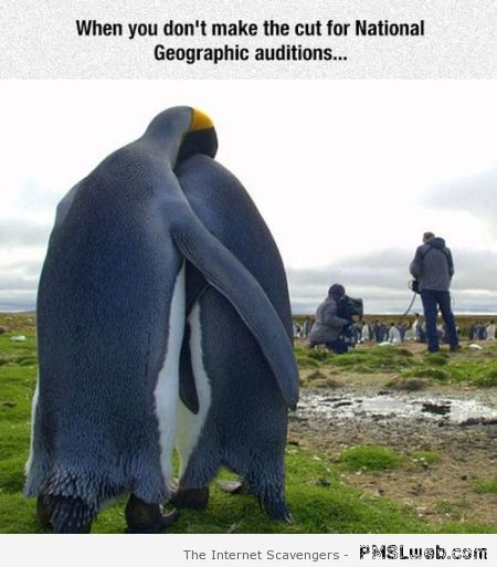 Funny National geographic auditions – Funny Monday images at PMSLweb.com