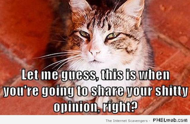 Your shitty opinion cat meme – Tuesday lolz at PMSLweb.com