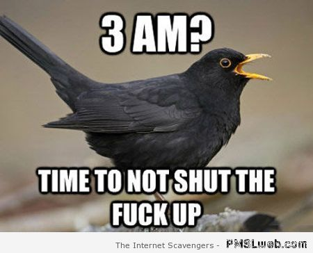 Scumbag bird meme – Funny Wednesday collection at PMSLweb.com