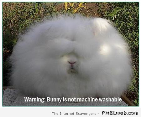 Bunny is not machine washable at PMSLweb.com