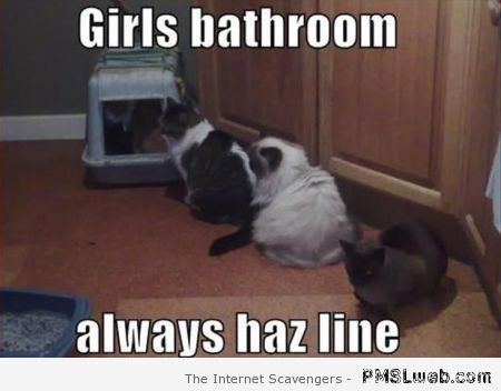Girl's bathroom cat meme at PMSLweb.com