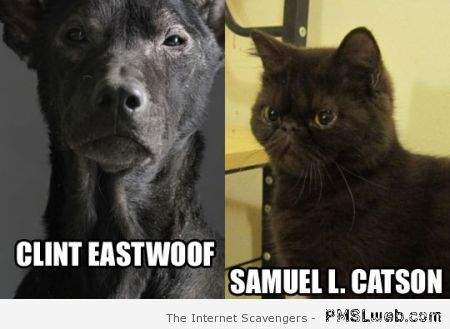 Funny Clint Eastwoof and Samuel L Catson meme at PMSLweb.com