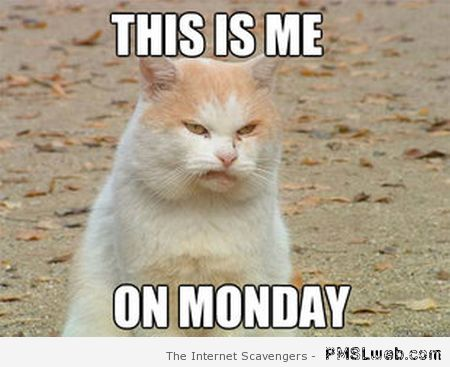 This is me on Monday meme – Sarcastic Playground at PMSLweb.com