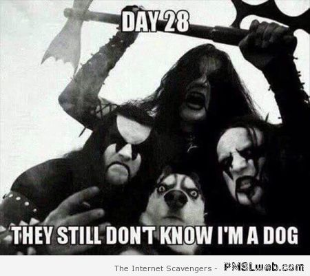 They still don't know I'm a dog meme – Hump day funnies at PMSLweb.com