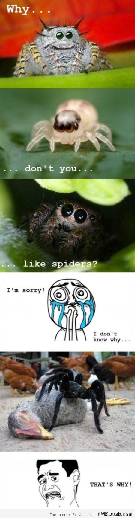 Why don't you like spiders meme at PMSLweb.com