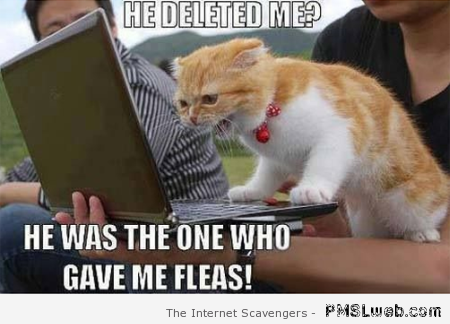 He deleted me cat meme at PMSLweb.com