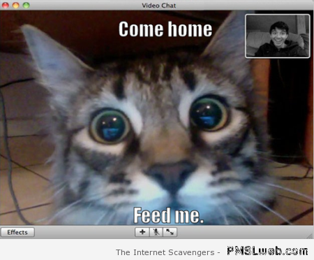Funny cat on video chat at PMSLweb.com