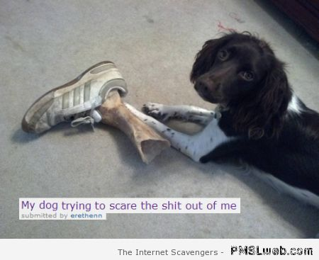 My dog trying to scare the shit out of me humor at PMSLweb.com