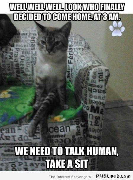 Funny sitting cat meme – Saturday PMSL at PMSLweb.com