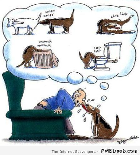 Funny dog cartoon – Funny dogs at PMSLweb.com