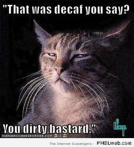 Decaf you say funny cat meme – Sarcastic Playground at PMSLweb.com