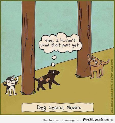 Dog social media funny cartoon at PMSLweb.com