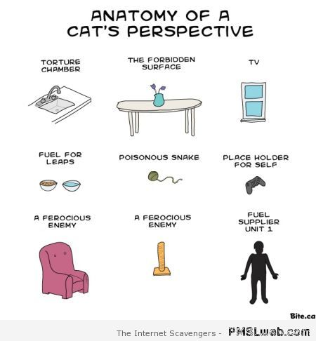 Anatomy of a cat's perspective at PMSLweb.com