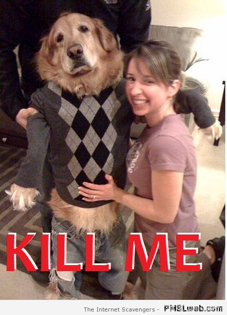 Kill me dog meme at PMSLweb.com