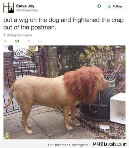 I put a wig on my dog humor at PMSLweb.com