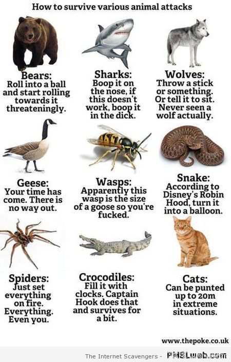 How to survive various animal attacks humor at PMSLweb.com