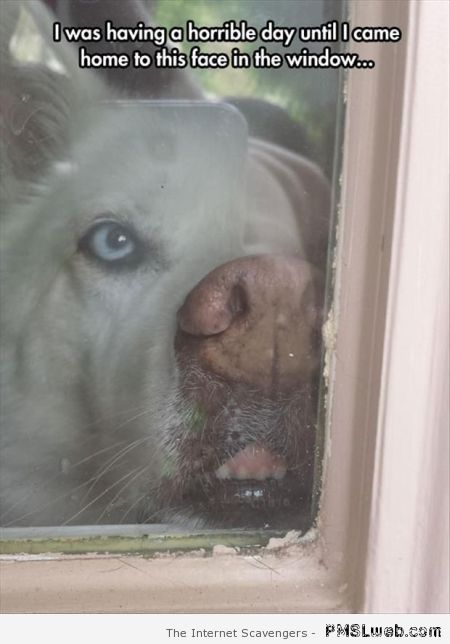 Dog face in the window meme at PMSLweb.com