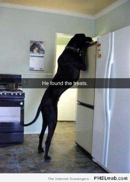 He found the treats dog humor at PMSLweb.com