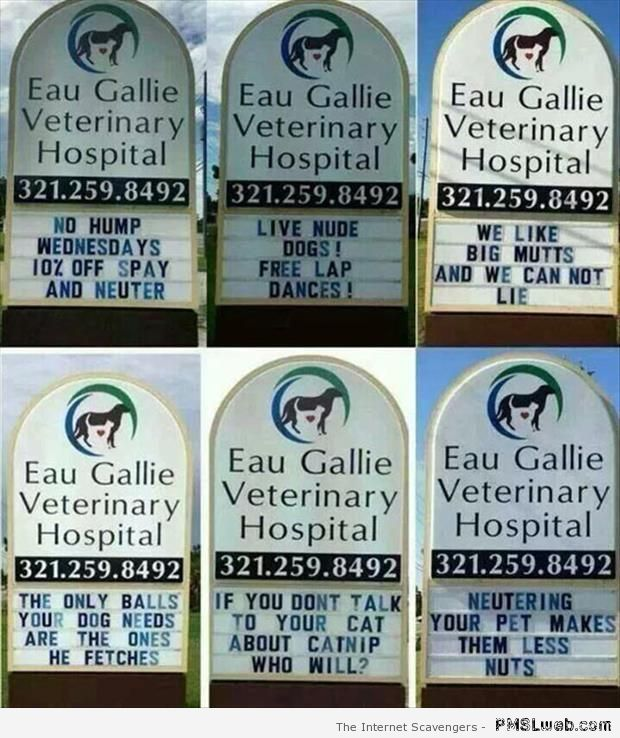 Funny veterinary signs – Funny dogs at PMSLweb.com