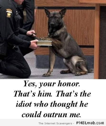 Dog in court humor – Funny dogs at PMSLweb.com