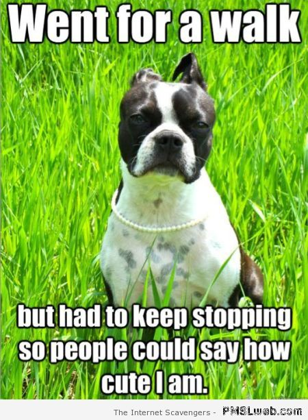 Went for a walk dog meme at PMSLweb.com
