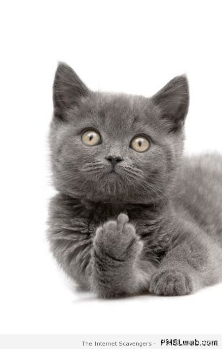 Cat with the middle finger – Daily sarcasm at PMSLweb.com