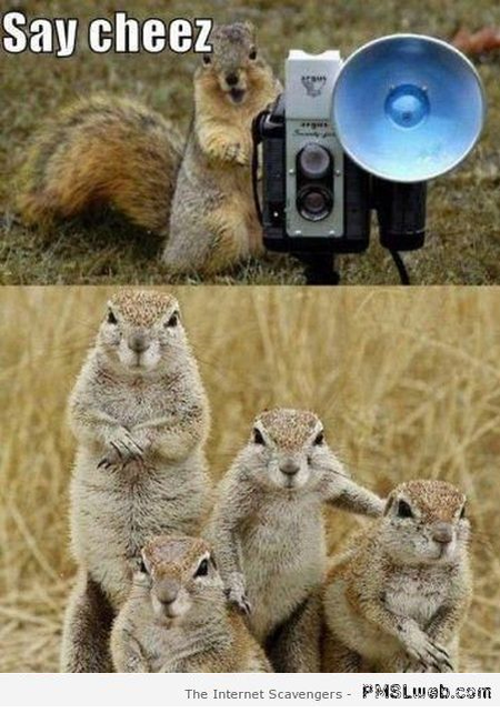 Funny rodents say cheese meme – Hump day playtime at PMSLweb.com