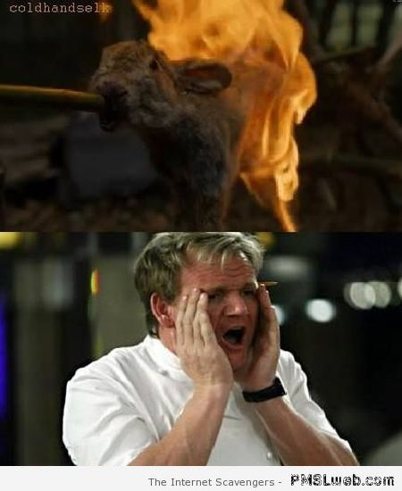 Funny Gordon Ramsay and Game of Thrones at PMSLweb.com