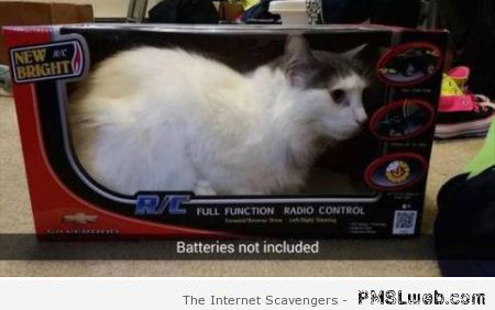 Funny new cat in its box at PMSLweb.com