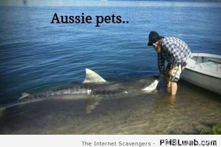 Funny Aussie pets humor at PMSLweb.com