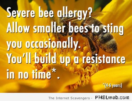 Funny stupid bee allergy hack at PMSLweb.com