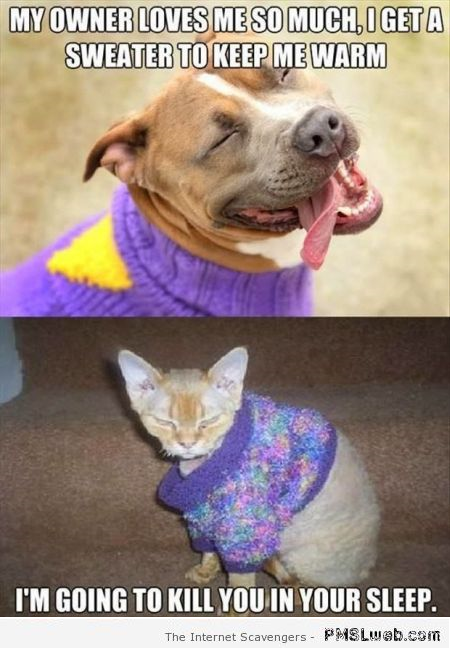 Funny dog versus cat in sweater – Monday funnyness at PMSLweb.com
