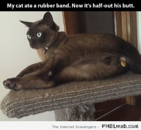 26-funny-my-cat-ate-a-rubber-band