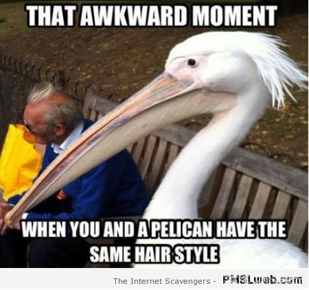 That awkward moment share the same hairstyle with a pelican meme at PMSLweb.com