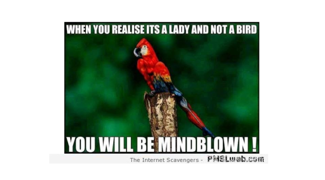 Woman and not a bird mindblow at PMSLweb.com