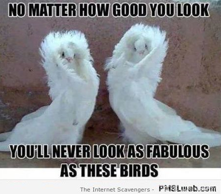 You'll never look as fabulous as these birds meme at PMSLweb.com