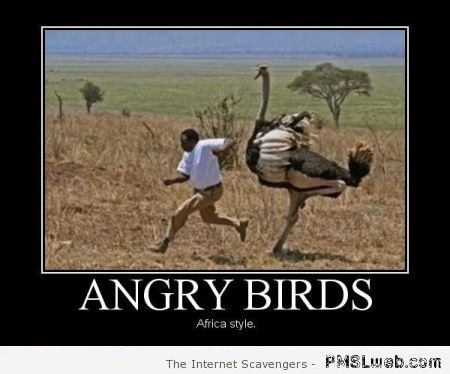 Angry birds African style – Weekend nonsense at PMSLweb.com