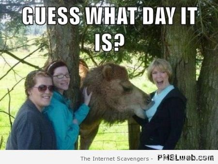 Guess what day it is meme – Jokey Hump day at PMSLweb.com