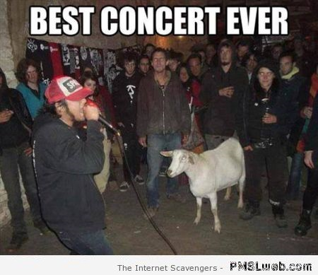 Best concert ever meme – PMSL pics at PMSLweb.com