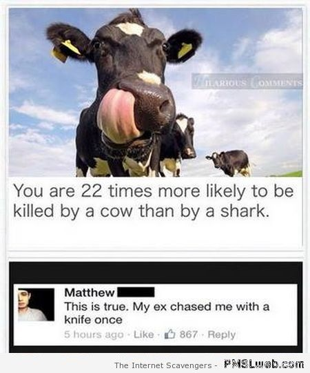 My ex is a cow funny comment at PMSLweb.com