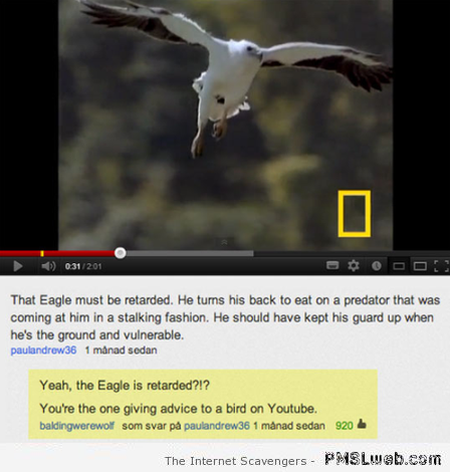 Funny eagle video Youtube comment at PMSLweb.com