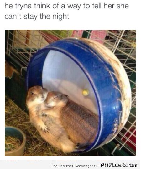 Funny hamster trying to tell her she can't spend the night at PMSLweb.com