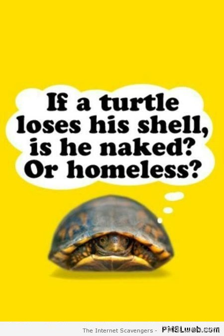 If a turtle loses his shell humor at PMSLweb.com
