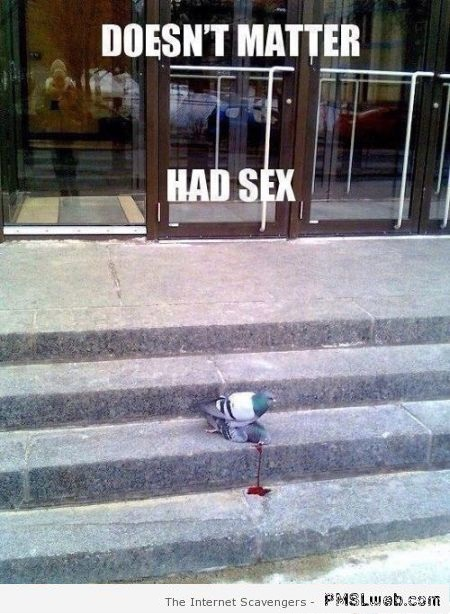 Pigeon doesn't matter had sex meme at PMSLweb.com